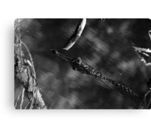 Predator Abstract Canvas Print