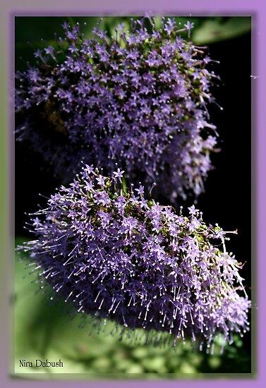 As Delicate as Pastel Purple Can Be by Nira Dabush