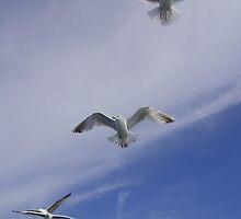 Aerodynamics by brucemlong