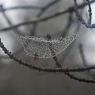 Safety Net by Catherine Davis