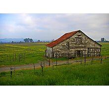Barn Among The Vineyards Photographic Print