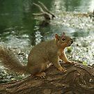 mr. squirrel by Lacy O.