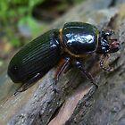 The Big Black Bug  by kelleybear