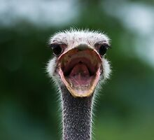 Angry Ostrich by Jesse James G.........