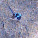 Blue Wren I by Imageo
