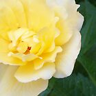 A Yellow Rose For You by Dennis Knecht