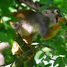 Squirrel monkey by jdmphotography