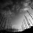 Yachts in the sky by Donncha O Caoimh