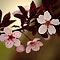 Plum Blossoms - Green Background by Ryan Houston