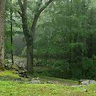 Smoky Mountain Rain by Gary L   Suddath