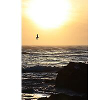 The Lone Seagull Photographic Print