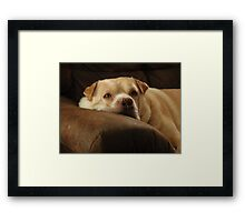 Max Being Tolerant Framed Print