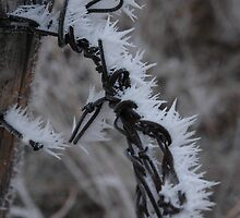 Ice Storm by indianalu