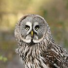 The Great Grey Owl by Tawny