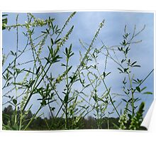 White Sweet Clover And Friends Poster