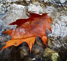 Winter Trail 2 by SRowe Art
