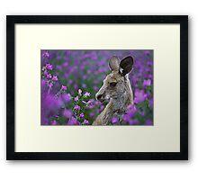 Roo in flowers. Framed Print