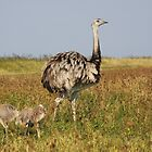 Greater Rhea Male with Hatchlings by Jo Nijenhuis