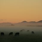Sunrise near Stanley in far nor west Tasmania , Australia by phillip wise
