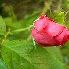 Flora and fauna  by anaisnais