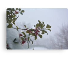 Snow on the holly Canvas Print