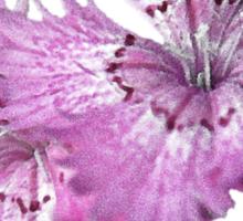 Dianthus (T-Shirt), light Sticker