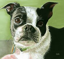Boston Terrier Pastel by AngelaBishop