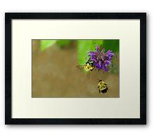 Beeing Together Framed Print