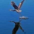 Great Blue Heron by joeschmoe96