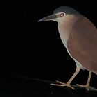 Night Heron by Ngakeone