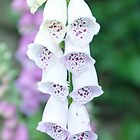 Fox Glove by Nala