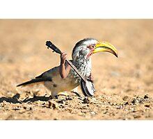 Grumpy Banjo Bird Photographic Print