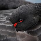 Black Swan by Tony Dewey