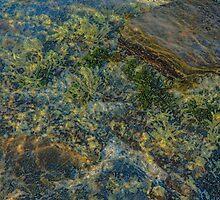 Rock Pool by ShireArt