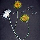 Dandelions by Sandy Wager