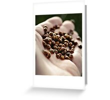 Lady Beetles Greeting Card