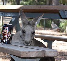 "Even roos ""can't beat the feeling"" by Tim Bates"