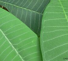 Plumeria Leaf Study (pic1) by Chris McKinney