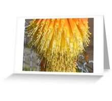 Bee at the Bottom Greeting Card