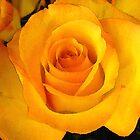 Yellow Rose by Lesley Morgan
