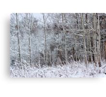 Winter's Spell IV Canvas Print