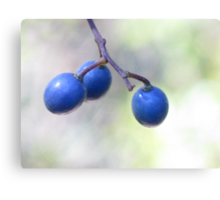 Three Blue Berries Canvas Print