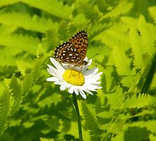 Mini Butterfly by marchello
