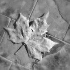 Leaf in Grey by Sparowsong
