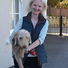 Bedlington Terrier by lynn carter