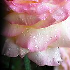 Waterfall of a Rose... by LindaR