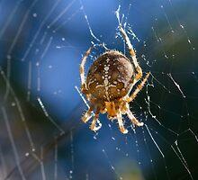 Spider, Castiglioncello del Trinoro, Tuscany, Italy by Andrew Jones