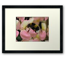 Pink Lupin With Guest Framed Print