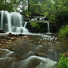 Hunts Creek by Malcolm Katon