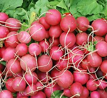 Radishes by Miriam Gordon
